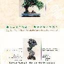 2nd Asia Pacific bonsai & suiseki convention & exhibition