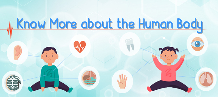 Know More about the Human Body