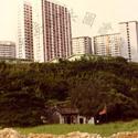 The temple at Ha Ko Tan Street and Hong Fu House, Cheung Hong Estate